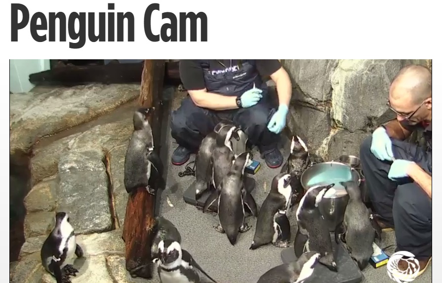 Screenshot of the Monterey Bay Aquarium Web Cam.  Feeding Time!