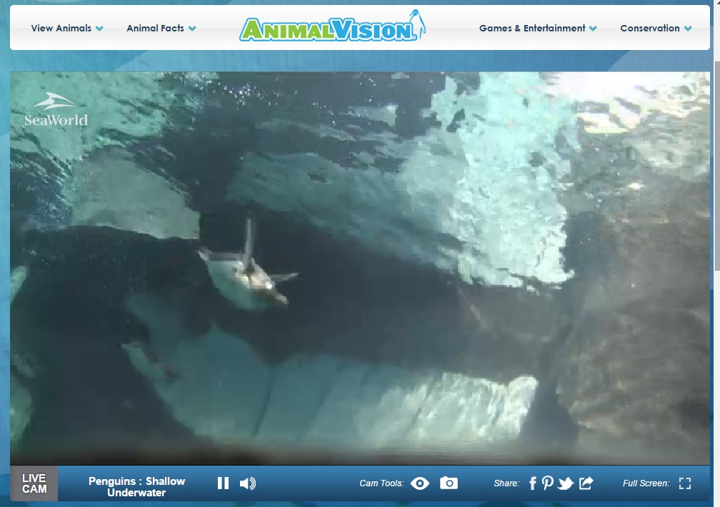 Screenshot of one of the SeaWorld Penguin Cams.